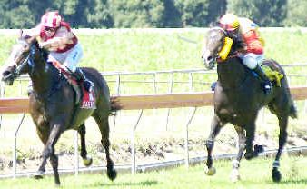 Flood Hero (above), trained by Paddy Hancock, heads for the post in winning the Benchmark 65 Handicap (2000m) at the Lismore Turf Club race meeting on Saturday.