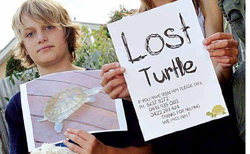 Matt and Mackenzie Fordham are seeking their much-loved missing turtle Aeropop.