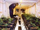 Tweed Senior Constable Simpson examines the elaborate hydroponic cannabis crop.