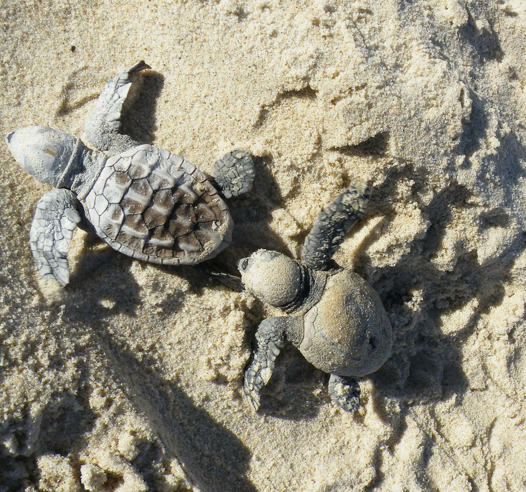 Mayor Jack Dempsey has questioned parking at the new Mon Repos turtle centre.