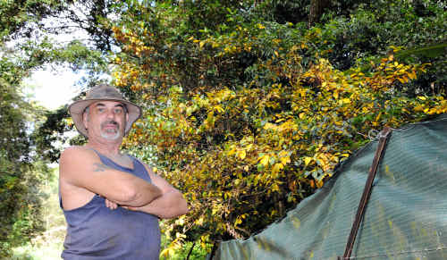 Noel Burke stands outside the boundary of his Beenham Valley property and assesses the damage to his trees.