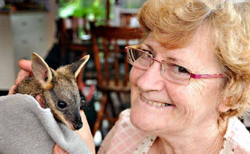 Paula Rowlands with a female swamp wallaby she is caring for.
