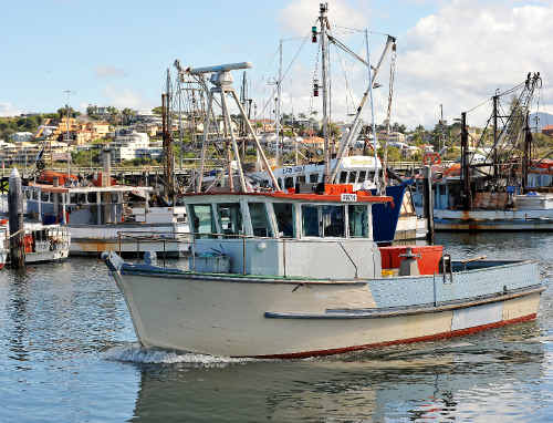 The livelihoods of fishers and their families, associated with the Coffs Harbour Co-Op, are a worry.