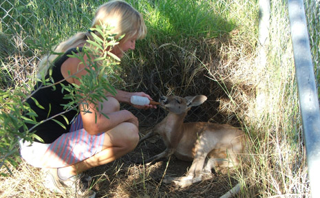 STOLEN: Gemfields wildlife carer Carol Graham is pleading for hte return of five joeys.