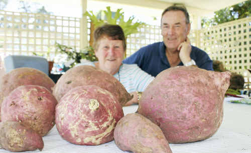Donna and Ray Wingett were surprised to find giant sweet potatoes in their vegie garden after their first attempt at growing them.