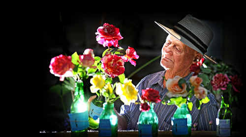 Syd Mattock of Chatsworth Island has a good look at the rose that won him first prize at the Maclean Show.