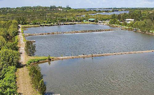 Ballina Fishing Park on North Creek Road will be auctioned on May 13. It has attracted much interest including one prospective buyer from Saudi Arabia.