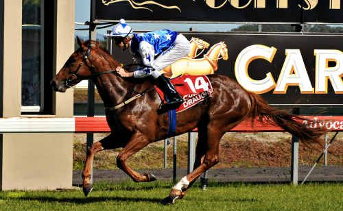 Lastpic is a rough chance in the 3YO Fillies Plate at the Gold Coast today with Glen Colless in the saddle.