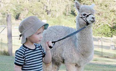 Good yarn: Learn about alpacas.