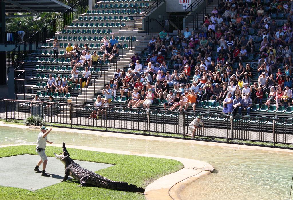 A croc show in the main arena, the Crocoseum.