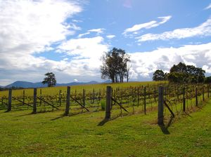 Sunshine Coast vineyards and wineries