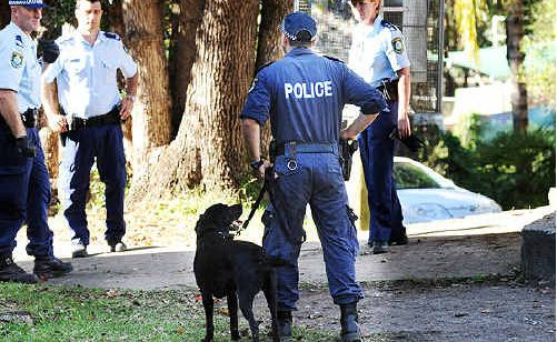 Police sniffer dog Wilson at work this week in Nimbin.