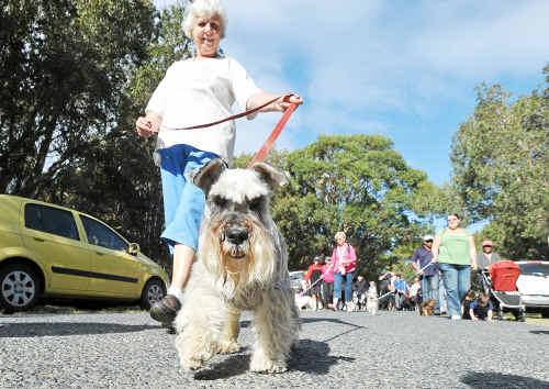 RSPCA paws walk: Coffs Coast resident Celia Rowe walking the route with her dog, Zac.