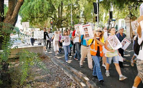 Marchers in Brisbane on Saturday protest against the treatment of Fraser Island dingoes.