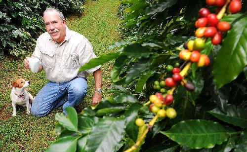 BEAN THERE: Tintenbar coffee grower Jos Webber and his dog Suzi pictured on his property among the coffee trees bearing fruit. The local industry is experiencing a renaissance with demand outstripping supply Jacklyn Wagner