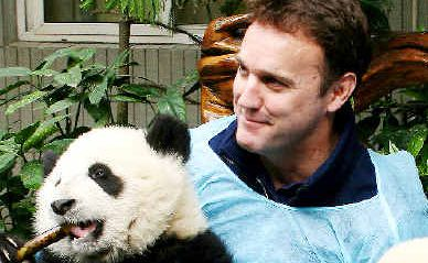 Pandering to wildlife: SCU graduate Dermot O'Gorman, the new head of WWF-Australia, played a key role in helping to protect panda habitat as chief executive officer of WWF-China.