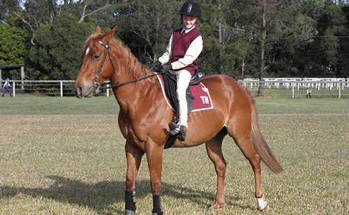 Cash – a strong, healthy horse dearly loved by his owners – had to be put down on Monday after contracting Hendra virus.