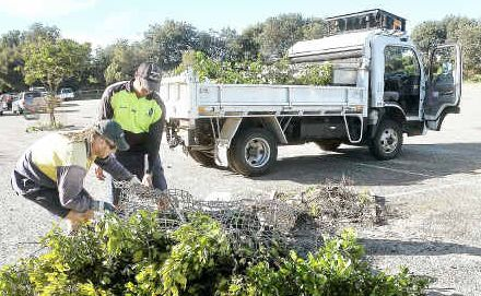 What a mess: Coffs Harbour City Council workers Kris Pierce and Darren Brian tidy up at the surf club car park yesterday morning.