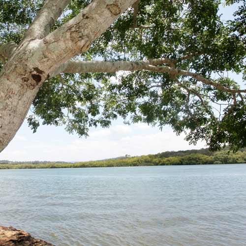 Maroochy River.