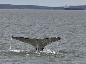 Possible whale presence in harbour, police urge caution