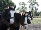 Clydesdale horses at Jondaryan Woolshed