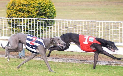 Big Bunga approaches the Border Park Galaxy finish line and $25,000 for his connections, three-quarters of a length ahead of second-placed Elite Size Blue while Tricky Uno was third.