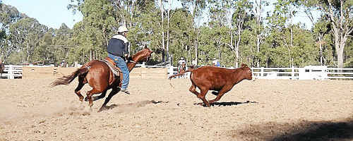 Glen Ward won the Open event on George at the Gunalda Campdraft at the weekend. Trader Wilson on horse Sergant finished second, followed by Glen Ward on Rin Tin.