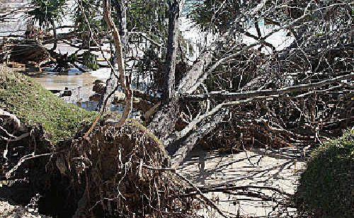 Fallen trees mark the changing coastline of Kingscliff Beach.