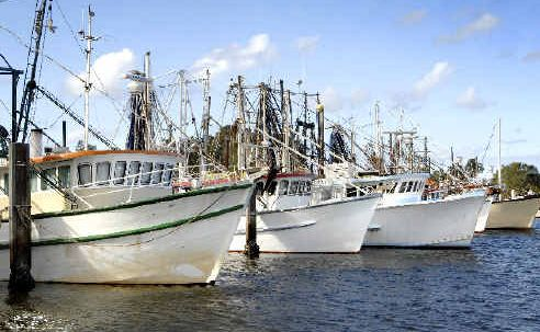 Fleets shrink: The Ballina Fishermen's Co-operative fears for the future of trawler fleets like those moored at Ballina as the Federal Government plans to create two new deepwater marine parks off the Tweed and Clarence coasts.