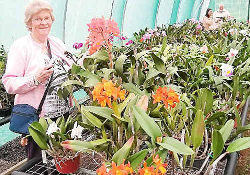 Kitty Milner, of the Opawa-St Martins Garden Club in New Zealand, found Greens' orchids a new experience. She attended the last meeting of the local orchid society and enjoyed the orchid house walk- through and had her camera at hand.