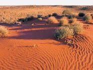 Arid land - Simpson Desert