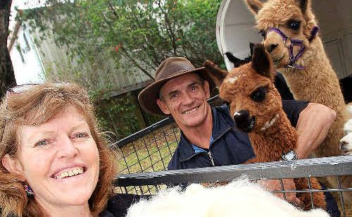 Suzanne and Dennis Boyle with some of their alpacas and the fleece they produce.