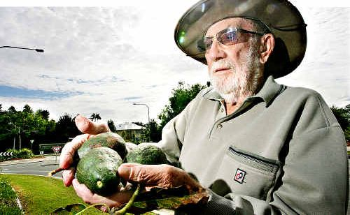 Woombye's Ken Webb hasn't been able to spray his avocado crop for four years because of residential development in the area.