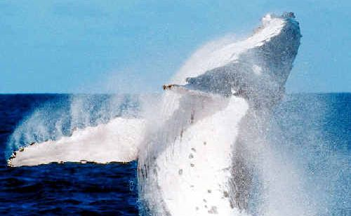 A LEADING Australian legal expert, who has been working since 2005 on legal arguments that challenge Japan's whaling program in the Southern Ocean, will be giving a free public seminar at Southern Cross University's Lismore campus next Wednesday.