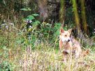 Wild dog and pest control project gets $100,000 funds