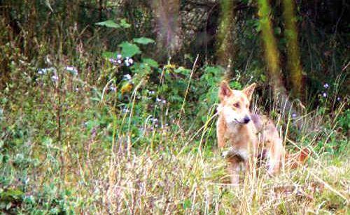 Wild dog and feral pest control program.