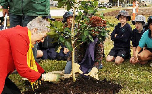 TAKING ROOT: Lismore mayor Jenny Dowell plants a tree to mark the completion of stage 1 of the Nesbitt Park redevelopment.