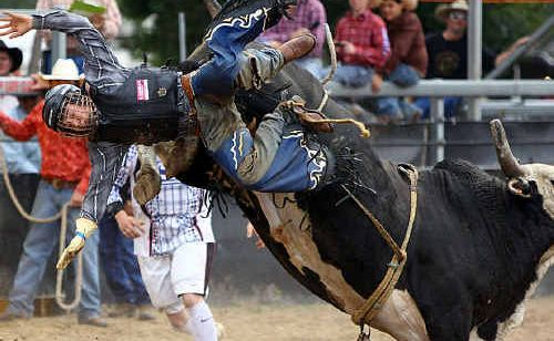 ANOTHER DOWN: Cowboys had their work cut out straddling some fiery bulls at the Emerald Rodeo and (inset) a future cowboy takes in the ring-side action. Photos: Terry Hill