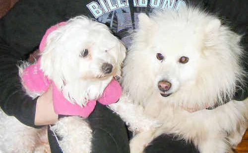 Melissa Ziser keeps her dogs Bella and Mindy warm.