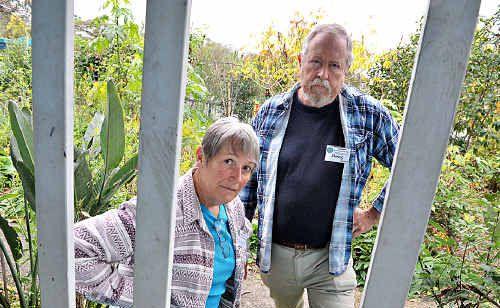 Doug and Linda Mahony are devasted by the vandalism at Yandina Community Gardens.