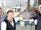 Mooloolaba fisheries to be hit hard by reserve declarations