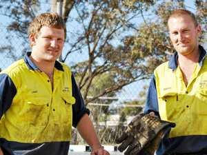 Tradies' rescue stranded koala