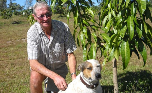 Maurice Bathersby and his mate at one of the Bundy Special mango trees on his organic farm near Baffle Creek.