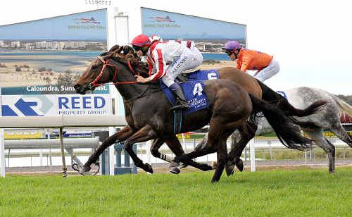Samantha Munro guides Montana Hilton to a narrow victory in the Coastal Effect Rendering Handicap at Corbould Park.