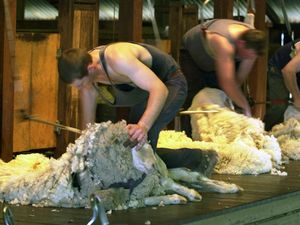 Stronger currency fails to dent momentum of wool price rise