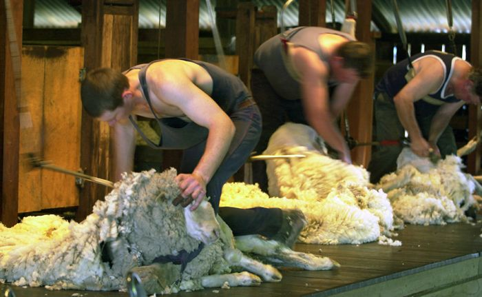 A New Zealand lobby group wants sheep shearing to become an Olympic demonstration sport.