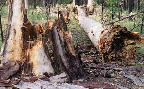 Conservationists fear previously restricted areas will be opened up for logging if it 'maintains or improves' ecological outcomes under the State Government's new Ecological Harvesting Plans.