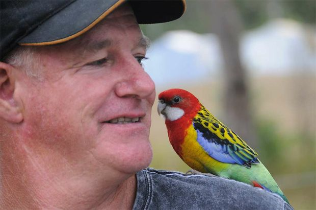 Sammy the multi-talented Rosella was whistling the blues at the Gympie Muster with owner Jimmy Traplin.