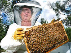 Bee population declining