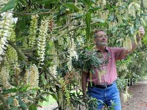 Gympie macadamia growers to crack open global market